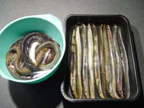 Как приготовить миногу в домашних